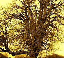AL PHAGOS  -  BEECH TREE -  'QUEEN OF THE WOODS' by ANNETTE HAGGER