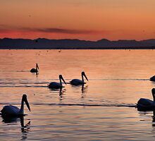 Pelicans Sunset Salton Sea by Jo Nijenhuis