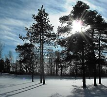 Sun and Pines by ArianaMurphy