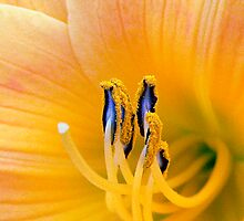 Yellow Day Lily macro #29 by Dave Rollins
