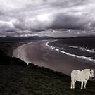 Spirit Pony Above Welsh Coastline by Wayne King