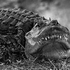 Alligator by Rob Lavoie