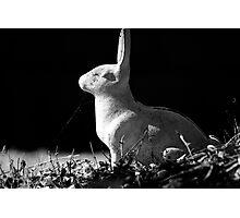 Run Rabbit Run Photographic Print
