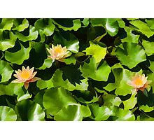 Light, Shadow and Color - Waterlily Pad Impression Photographic Print