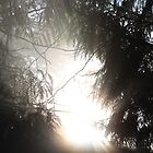 Sun Through Cedars by Magnum1975