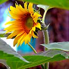 Sunflower by Lynette Higgs