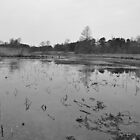 Winter: Lotus Pond by meinvb