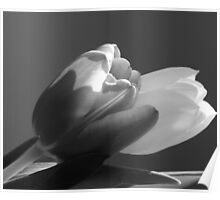 Two tulips in black and white Poster