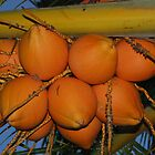 orange coconuts by khadhy