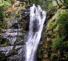 Mathinna Falls  Tasmania by julie anne  grattan