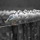 Odd one out by Steve  Liptrot