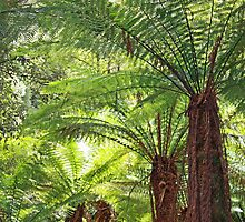 Tree Fern Canopy - Mt Field National Park, Tasmania by Ruth Durose