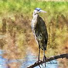 Heron by ClaireBull