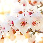 spring . 20 Março 2015. by terezadelpilar~ art & architecture