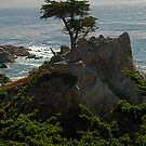 Lone Cypress--Monterey California by John Mckinney