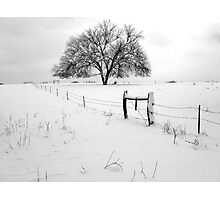 Lonely Tree and Pasture in Deep Snow Photographic Print