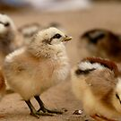 This Eyeliner is Great - Baby Chicks by AndreaEL