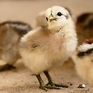 I'm Posting - Chick - NZ by AndreaEL