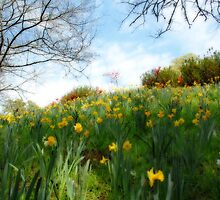 Spring, my favorite time of year by Bonnie T.  Barry
