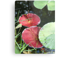 Waterlily Parasols Metal Print