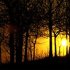 Sunset through the trees, Tandle Hills, Royton, Lancashire by newbeltane