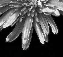 Miss Light by Donna Adamski