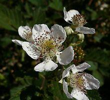 EG Flower 2 by beeden