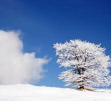 winter landscape by joyfull