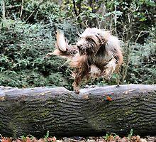Leap Of Faith by Paul Thompson Photography