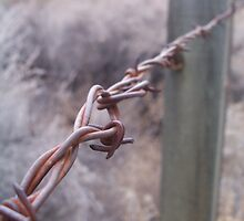 barbed wire by Mleahy