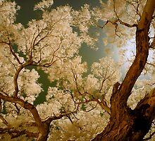Under the Same Sun by anwarsalim