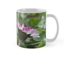 daisies in spring Mug