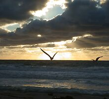 Flying bird in sunrise by CSSphotos