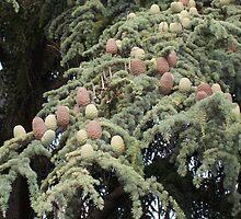 Pine Cones by WaleskaL