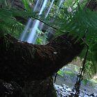 Tasmania/Australia by Lee Popowski