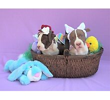 Easter Puppies Photographic Print