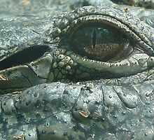 GATOR EYE by John Zawacki