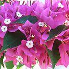 Tropical Pink surprise by Kaylene Passmore