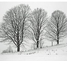 Winter Charm by marchello