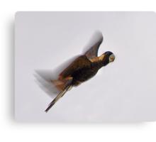 Black Cockatoo In Flight  Canvas Print