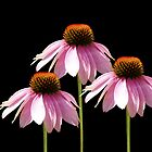Triple Echinacea Flowers by Cathy  Beharriell