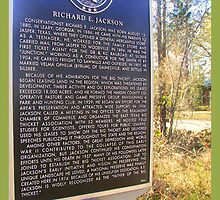 The Big Thicket In SE Texas by DottieDees