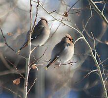 Two's Company.............. by PrairieRose