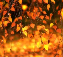 Backlit Leaves at Sunset by Ryan Houston
