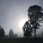 Early morning fog - Gloucester NSW by Robyn Selem