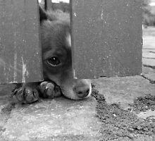 Dog under fence by Amy Skinder