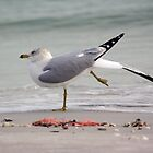 Sanibel Scenes 2011 by Karen Checca