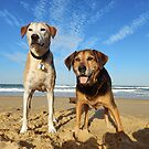 Harper & Cairo at the beach by Lee Lee