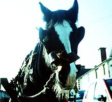Working Horse, Dublin by annette andtwodogs