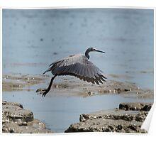 Birds of Trinity Inlet... Poster
